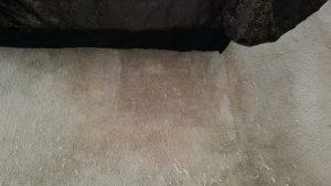Carpet Bleach Stain Repair Albuquerque