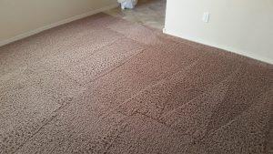 Carpet Cleaing Albuquerque