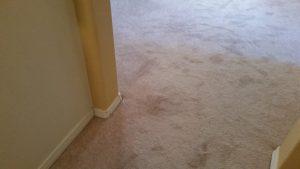 Carpet Restretch Albuquerque