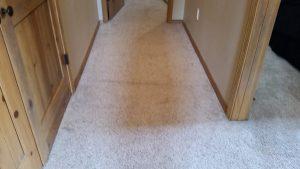 Hallway Carpet Re Stretch Albuquerque