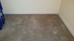 Pet Stain Carpet Repair Albuquerque
