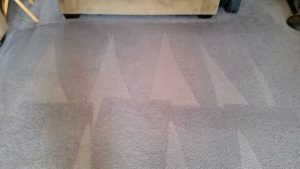 carpet cleaning north valley albuquerque