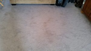 north valley albuquerque carpet cleaning