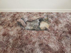 Los Lunas Carpet Repair